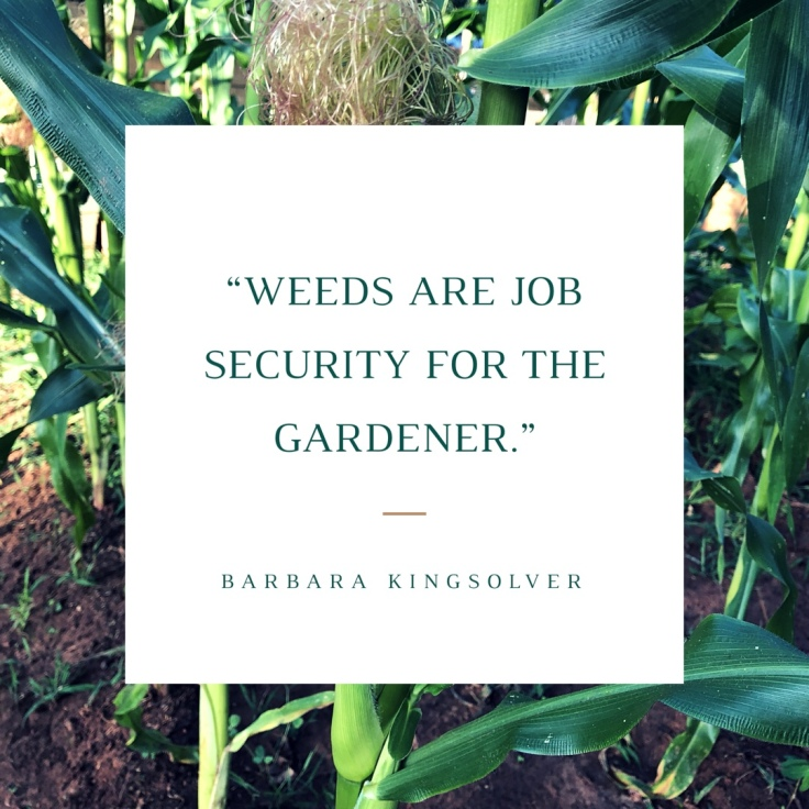 Gardening Quote: Weeds are Job Security for the Gardener
