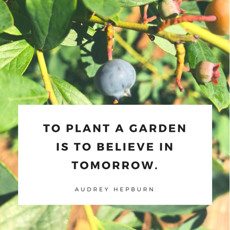Gardening Quote: To Plant a Garden is to Believe in Tomorrow