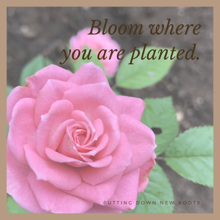 Gardening Quote: Bloom Where You Are Planted