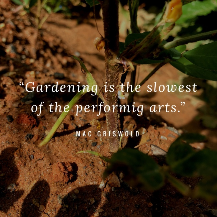 Gardening Quote: Gardening is the Slowest of the Performing Arts